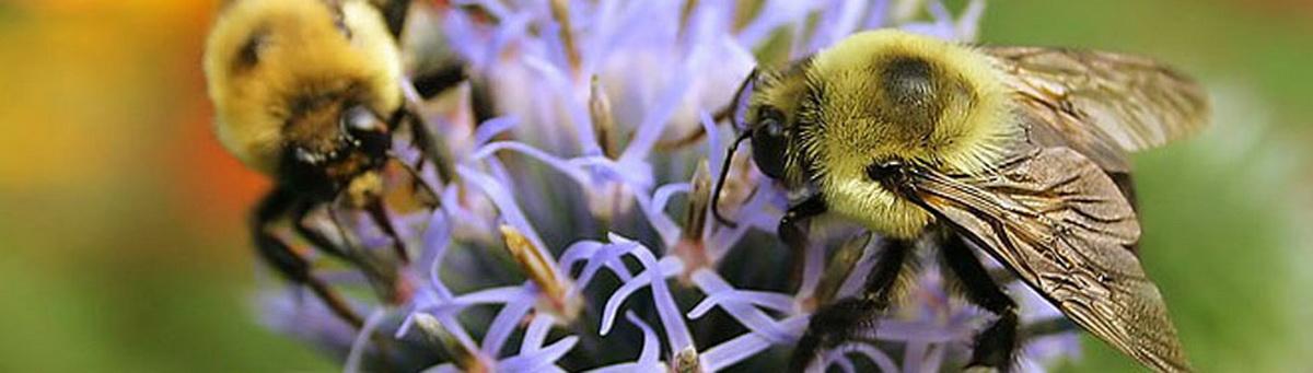 U ponudi sve potrebno za pčelarstvo